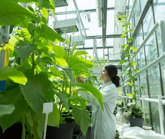 what is bio technology